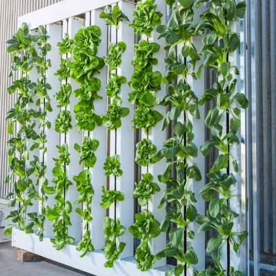 Vertical Hydroponics For Beginners
