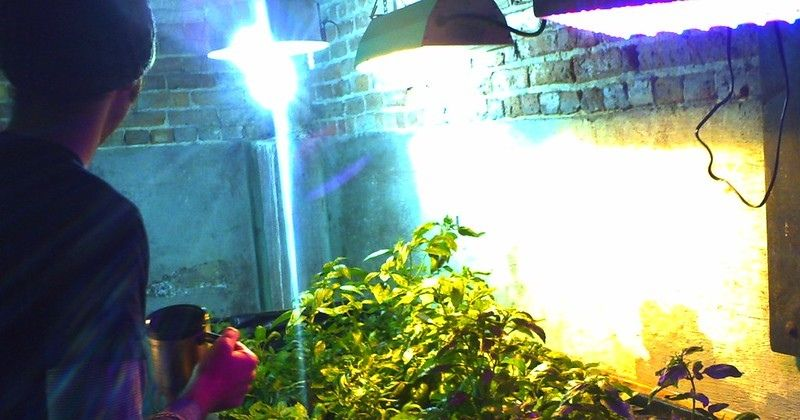 a picture of hydroponic lighting system in use