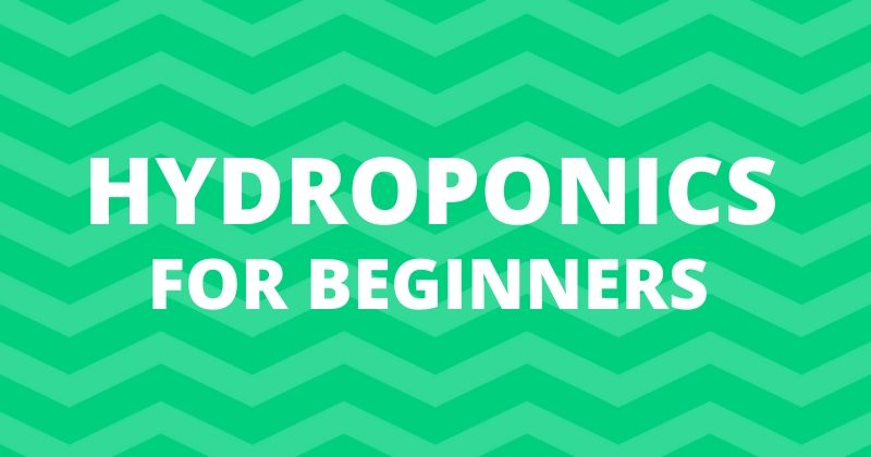 Hydroponic TDS For Beginners
