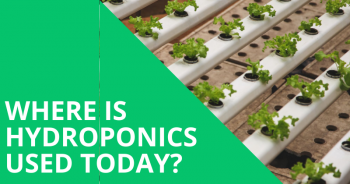 Where is Hydroponics Used Today?