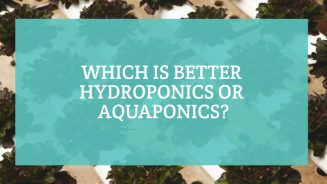 Which is Better Hydroponics or Aquaponics
