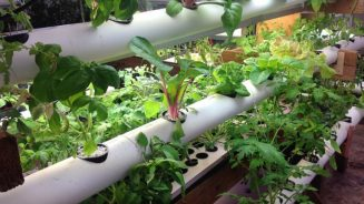 Why Hydroponics Is Useful For Crop Cultivation